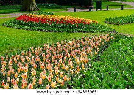 Colorful tulips flowerbeds in Keukenhof spring garden, Holland