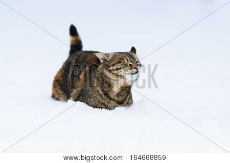 cute cat funny tumbles in the white cold snow in winter Park
