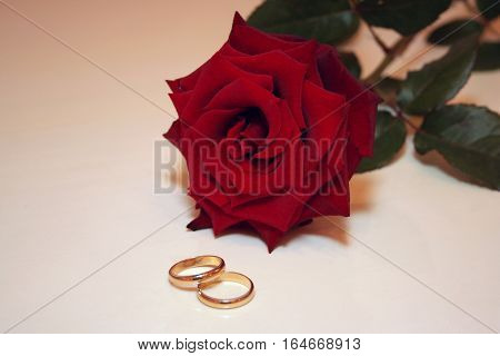 gold wedding rings on a background of white roses