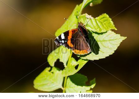 Monarch butterfly sitting on leaf with natural background
