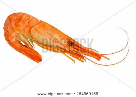Cooked shrimp isolated on white background. Boiled shrimp. Prawns. Seafood