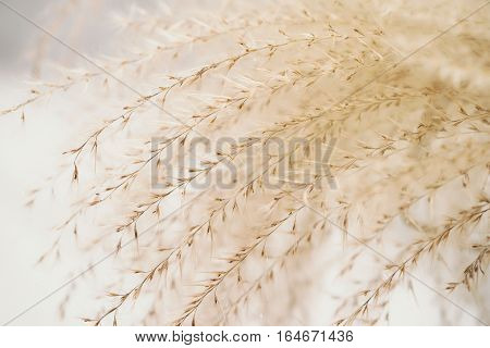 Close up grass similar to Stipa. Toned image in retro style. Vintage background.