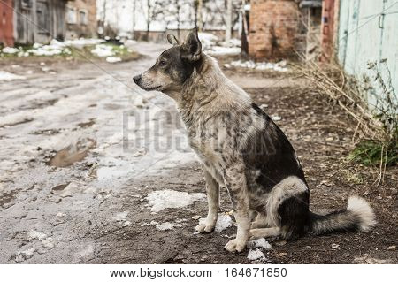 Lonely stray dog sitting on a dirty street at late fall season