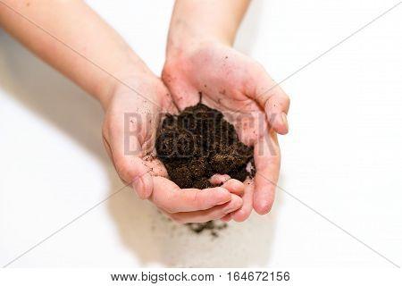 Fertile Soil In Hands