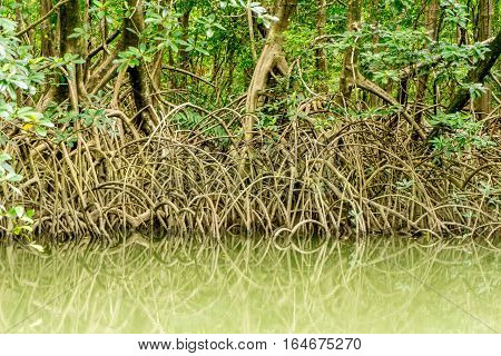 Mangroves in the Northern Part of the Amazon in Brazil