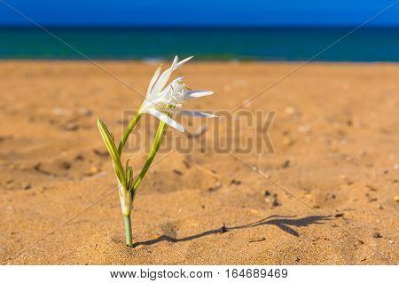 Kato Stalos beach near Chania great golden sand Chania prefecture Western Crete Greece