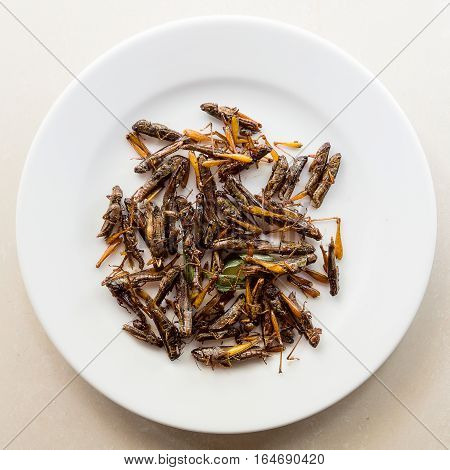 Crispy, fried grasshoppers served on a white plate, a common asian snack.
