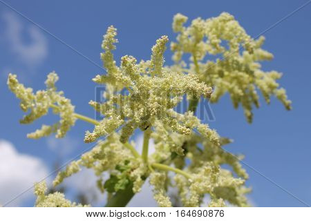 White seed branches - abstract background - selective focus,