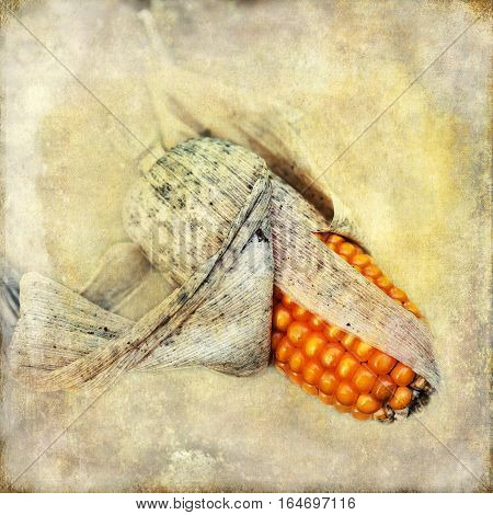 Corncob On Vintage Style Texture