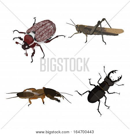 Insects on a white background. Detailed picture of a grasshopper mole crickets and beetles. Vector illustration