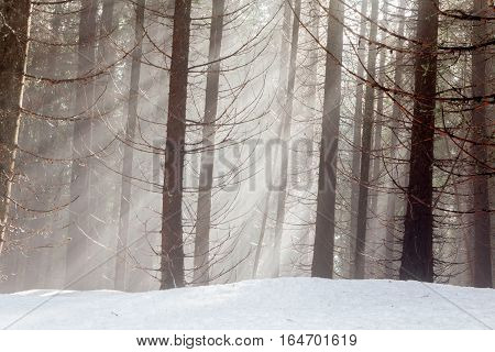 sun's rays shine through branches of winter forest