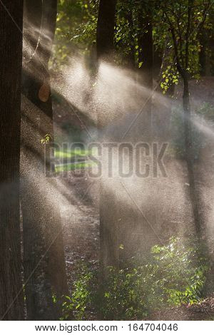 Sunbeams streak through tree branches as they backlight water from sprinkers