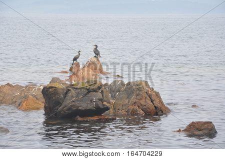 Japan sea west coast. Two cormorants sitting on rock.