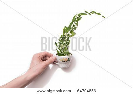 Flower patern on a white background. Cut flower isolated on white background. Taking care of nature. Green leaves in a white cup. Picture for bloggers. lay flat