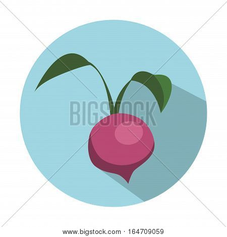 beetroot vegetable icon over blue circle and white background. colorful design. vector illustration
