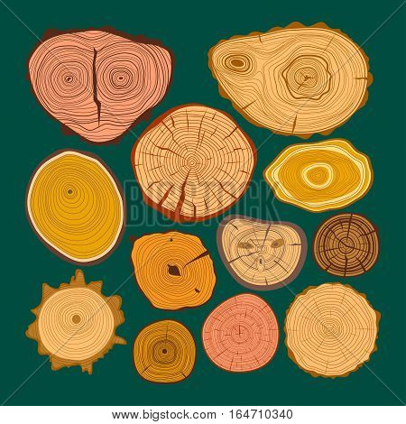 Wood slice texture tree circle cut raw material vector set. Detail plant years history textured rough, forest. Circular growth industry environment illustration.