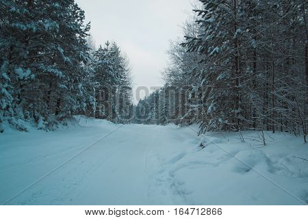 Snow covered pines in winter ural forest - empty road at sunset, horizontal, wide angle