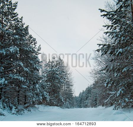 Snow covered pines in winter ural forest - empty road at sunset, vertical, wide angle