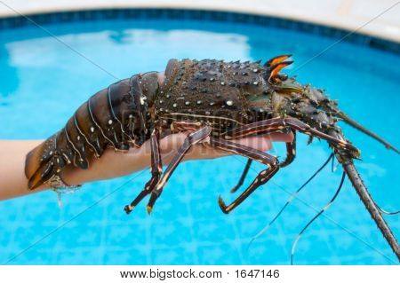 Lobster On The Hand