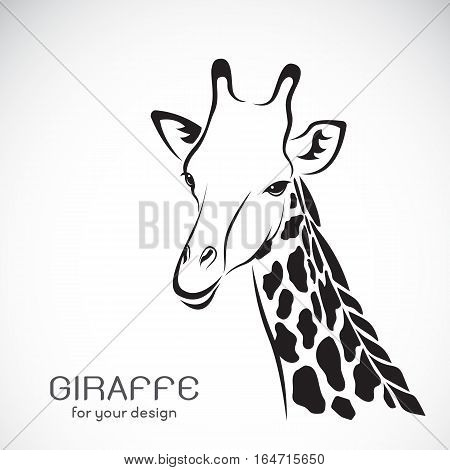 Vector of a giraffe head on white background Wild Animals.