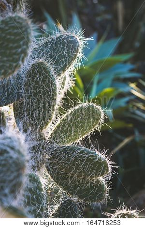 Close focus on cactus in low key scene with sunlight from behind inside indoor garden