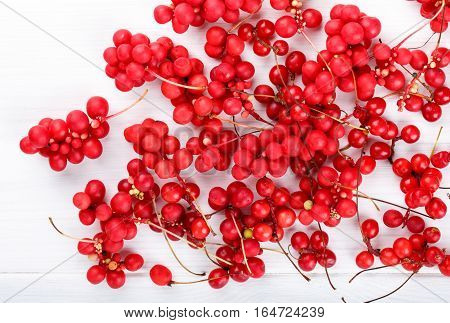 Schisandra chinensis or five-flavor berry. Fresh red ripe berry on white. Top view.