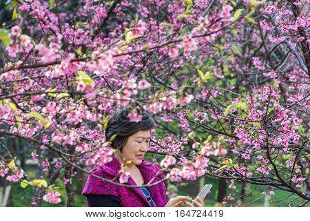 woman enjoy photo in smart phone after selfie at park under sakura tree