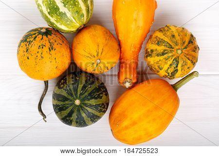 Little colorful ornamental pumpkins squash gourds. Decorative pumpkins. Mini gourds on white. Cucurbita pepo. Top view.
