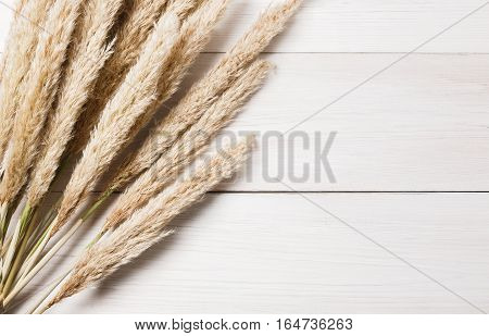 Autumn composition. Dried white fluffy cattail or typha flower top view on white wood with copy space. Floral composition