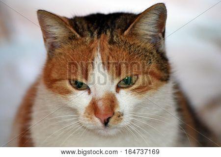 A cute cat, curious, look the camera lens