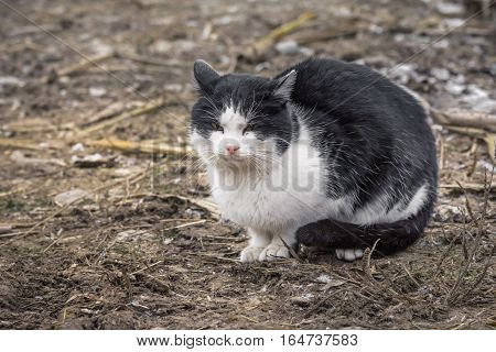Lazy Sleepy Cat Sitting On The Ground. Black And White Cute Cat With Eyes Nearly Closed Looking To T