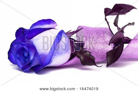 blue rose with ribbon over white background