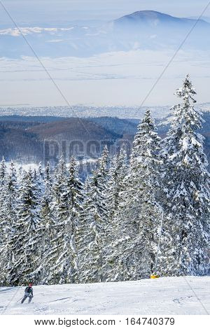 Winter landscape in the mountains with snow covering the pines and a skier going down the ski slope. View of the Poiana Brasov ski resort from Romania in the winter season.