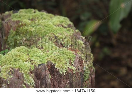 mossy, green log in the bush at fraser island