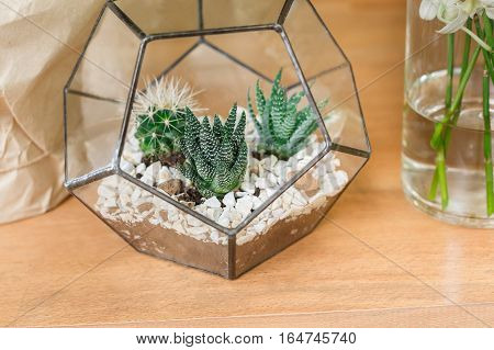 Small cactuses in glass pot. Flower shop sale, showcase closeup