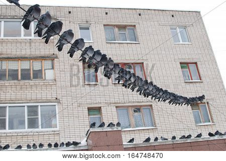 pigeon bird world city birds flyers shimmer