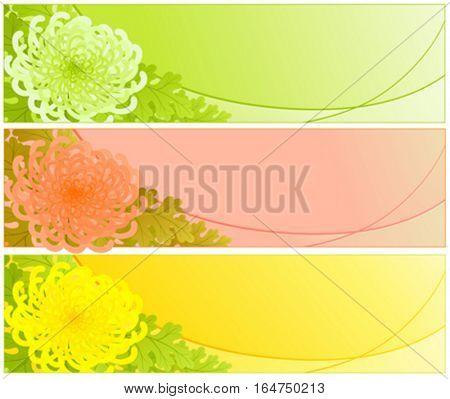 Chrysanthemum. Floral design. Vector illustration.