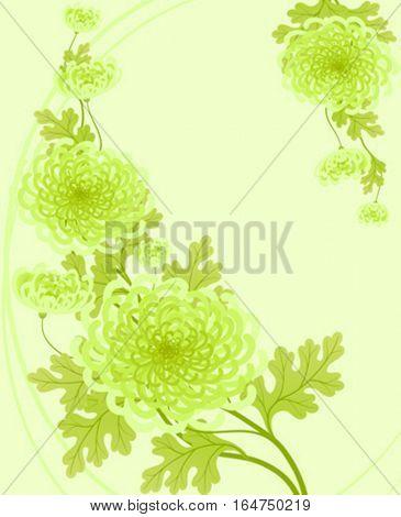 Chrysanthemums. Vector illustration.