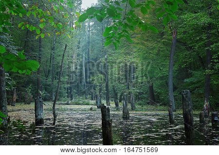 gloomy forest landscape in cool colors with lake and dead trees