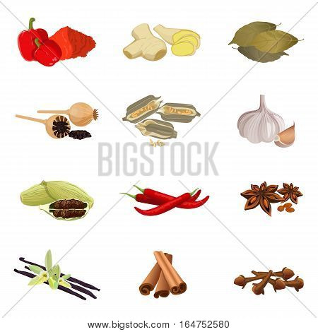 Collection of aromatic herbs red paprika, ginger root, bay leaves, dry poppy, sesame seeds, garlic clove, red pepper, anise star, vanilla sticks with orchid flower, cinnamon realistic vector