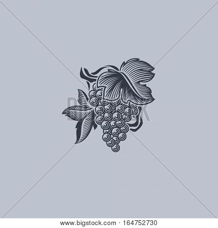 Grape with leaf. Element for design.
