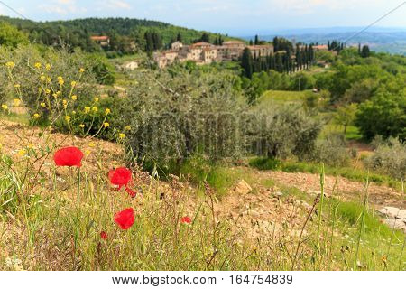 Red poppy flowers in Italian landscape in Tuscany focussed on the front