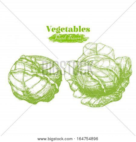 Head of Cabbage Hand Draw Sketch Organic Food Can Be Used For Restaurant Menu. Vector illustration