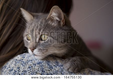 Woman holding her pet cat which is lying on her shoulder and looking through a window