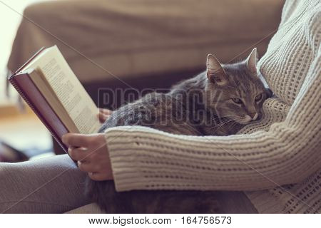 Soft cuddly tabby cat lying in its owner's lap enjoying and purring while the owner is reading a book. Focus on the cat; warm cozy domestic atmosphere