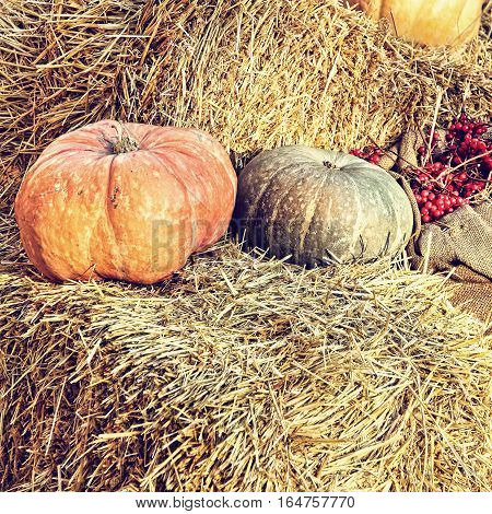 Thanksgiving Display of Pumpkin on hay bale taken closeup.Retro style toned image.
