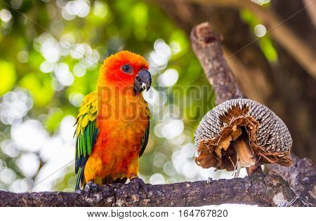 Colorful Sun Conure Parrot On Tree Branch
