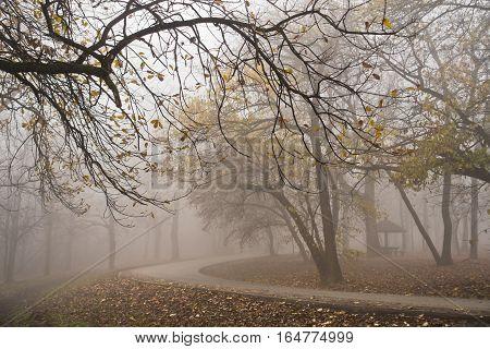 Forest road on a misty autumn morning in Kosutnjak, Belgrade, Serbia