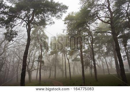 Forest path at foggy autumn morning, Kosutnjak forest, Belgrade, Serbia