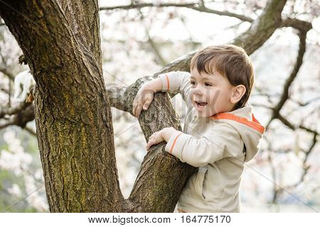 toddler boy in spring time near the blossom tree.